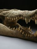 Wilfred Pritchard,Victorian Crocodile Skull,Gold plated bronze teeth, Bronze skeleton,Unique, £10,000 -£15,000174