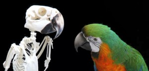 wilfred pritchard, art investment, taxidermy and skeleton parrots, unique